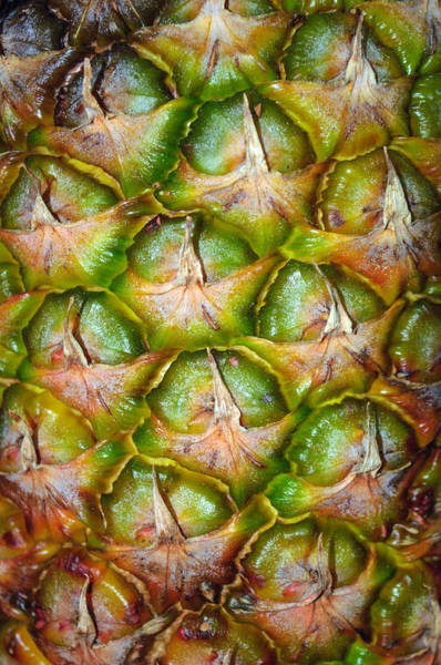 Photograph - Pineapple Skin by Tikvah's Hope