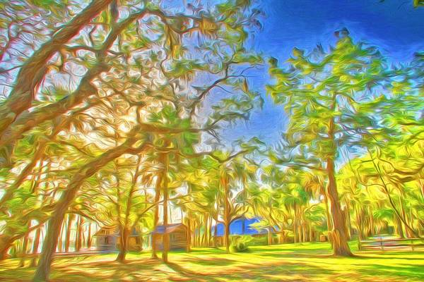 Photograph - Pines At Princess Place by Alice Gipson