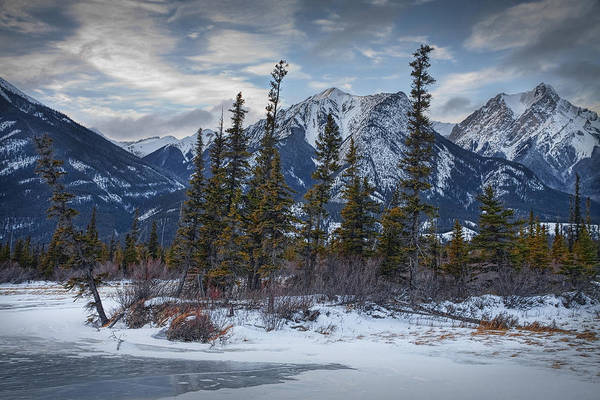 Photograph - Pines At The Edge Of A Lake By A Jasper National Park Mountain Range by Randall Nyhof