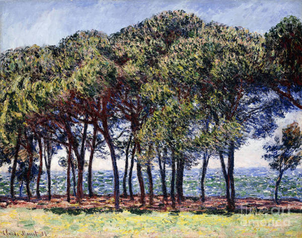 Monet Painting - Pines by Claude Monet