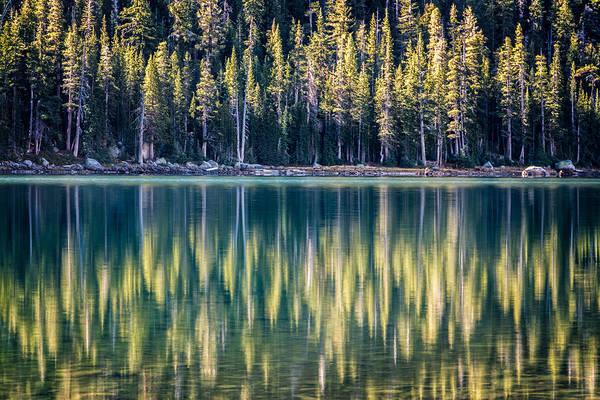 Pines Reflected In Tenaya Lake Art Print