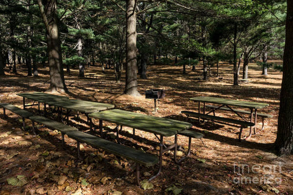 Wall Art - Photograph - Piney Picnic Grounds by William Kuta