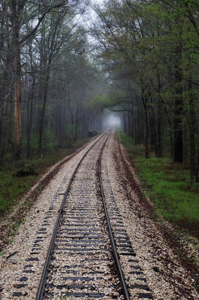 Hardwood Photograph - Pineywoods Train Excursions by Steven Ng