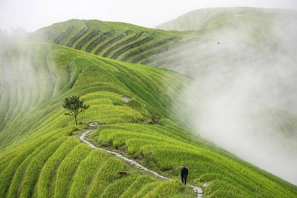 Chinese Photograph - Ping'an Rice Terraces by Miha Pavlin