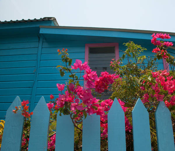 Photograph - Pink And Blue House by Susan Rovira