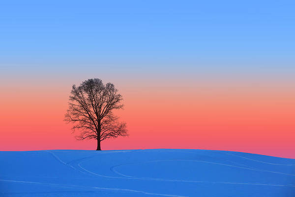 Photograph - Pink And Blue Silhouette by Larry Landolfi
