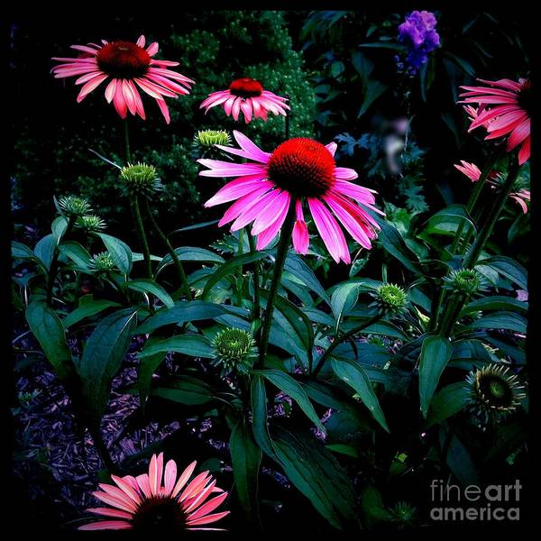 Photograph - Pink And Orange Catchy Colors by Frank J Casella
