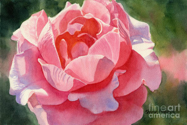 Peachy Wall Art - Painting - Pink And Orange Rose Blossom by Sharon Freeman