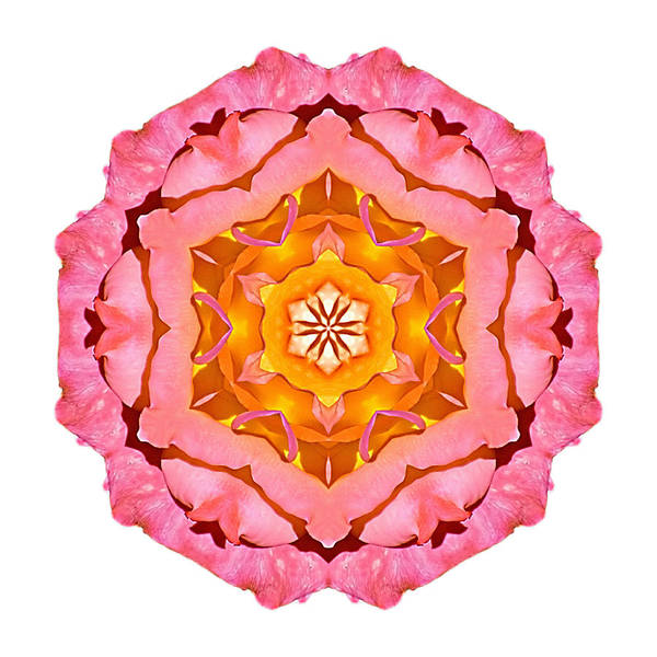 Photograph - Pink And Orange Rose I Flower Mandala White by David J Bookbinder