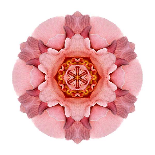 Photograph - Pink And Orange Rose Iv Flower Mandala White by David J Bookbinder