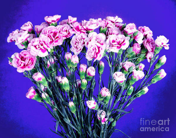 Photograph - Pink And White Carnations Bouquet by Larry Oskin