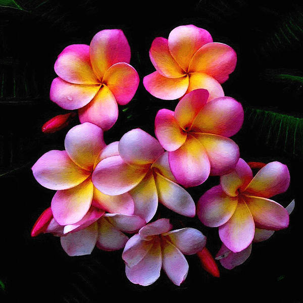 Painting - Pink And Yellow Frangipani by Dean Wittle