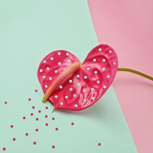 Photograph - Pink Anthurium by Juj Winn