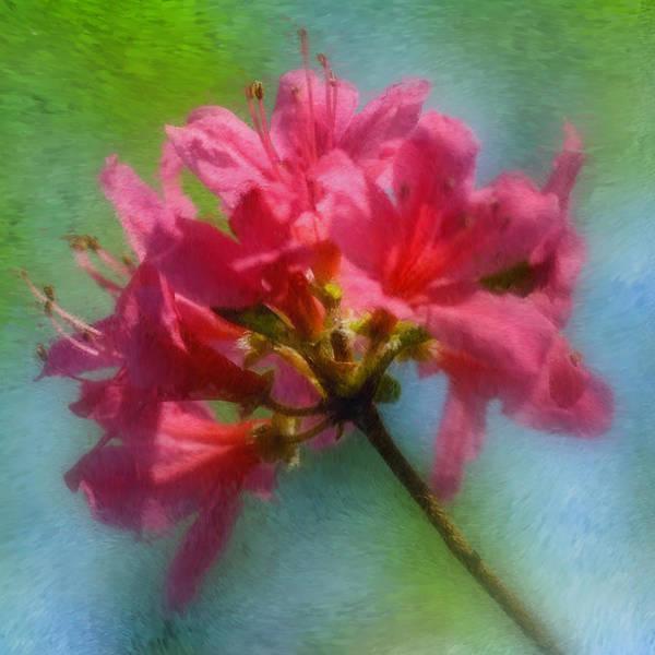 Photograph - Pink Azalea by Joann Vitali