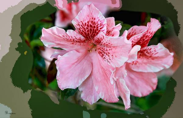Azalia Photograph - Pink Azalia by Bonnie Willis