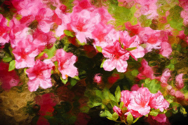 Photograph - Pink Azealas by Penny Lisowski