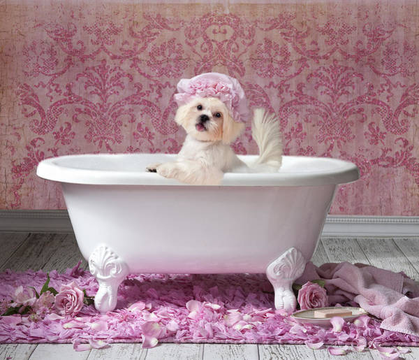 Doggy Wall Art - Painting - Pink Bath by MGL Meiklejohn Graphics Licensing