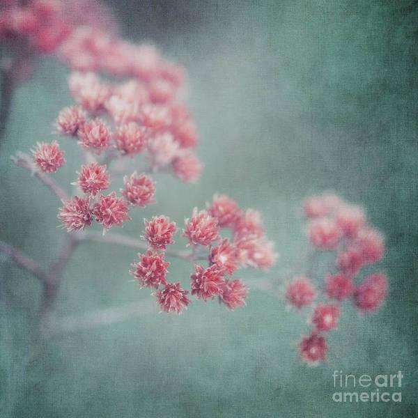 Wall Art - Photograph - Pink Beauty by Priska Wettstein