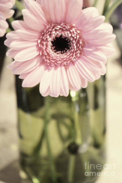 Photograph - Pink Blush by Traci Cottingham