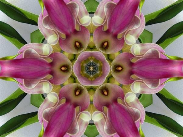 Digital Art - Pink Calla Lily Flower Mandala by Diane Lynn Hix