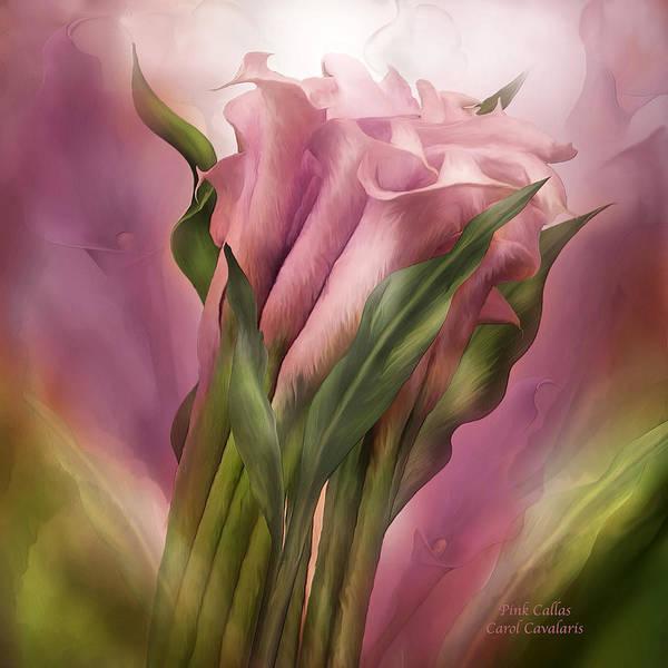 Calla Mixed Media - Pink Callas by Carol Cavalaris