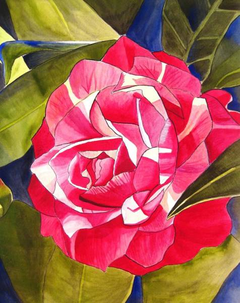 Pink Camellia Art Print by Sacha Grossel