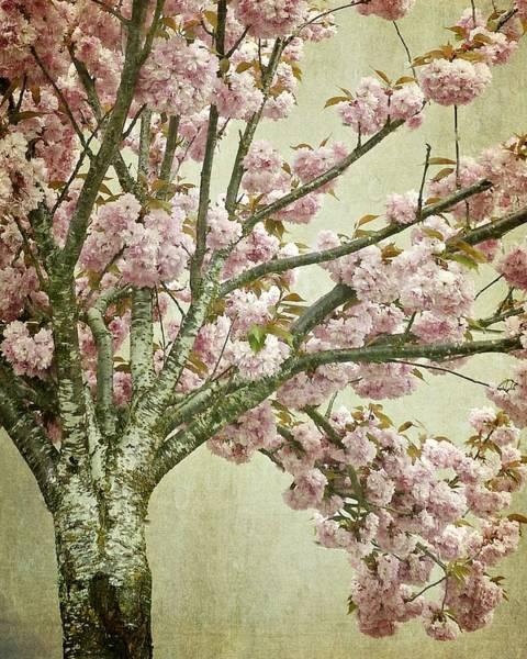 Photograph - Pink Cherry Blossom Tree by Patricia Strand