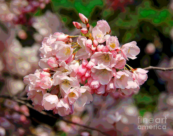 Photograph - Pink Cherry Blossoms by Larry Oskin