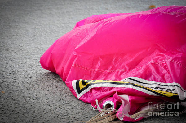Photograph - Pink by Cheryl McClure