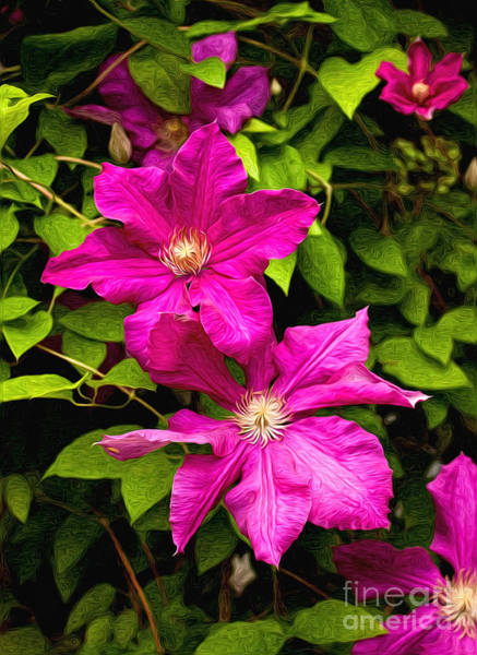 Wall Art - Photograph - Pink Clematis by Lena Auxier