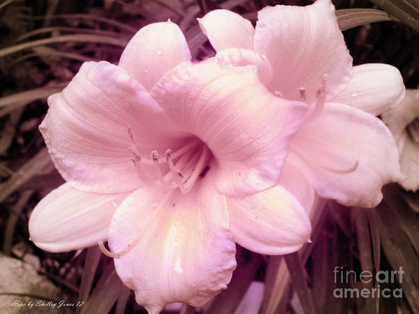 Photograph - Pink Daffy by Shelley Jones