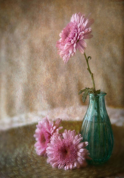 Wall Art - Photograph - Pink Daisies by Dale Kincaid