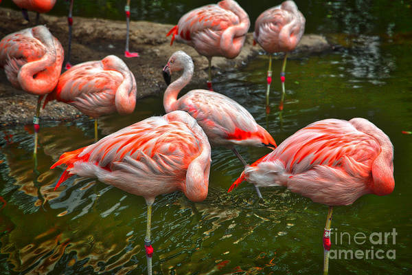 Wall Art - Photograph - Pink Flamingo by Tina Araquistain
