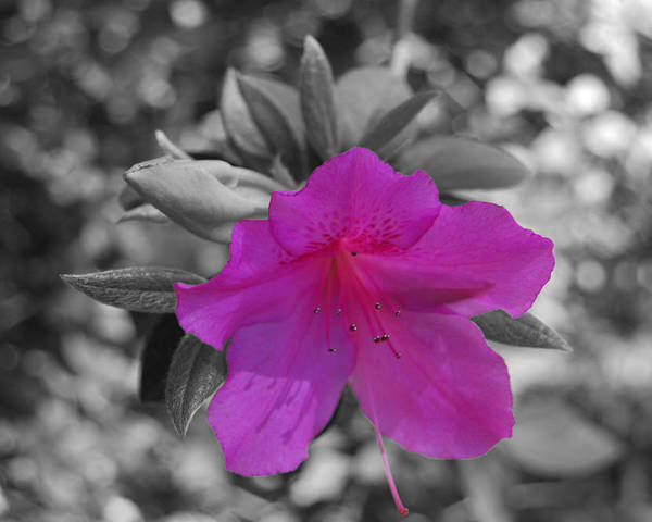 Photograph - Pink Flower 2 by Maggy Marsh