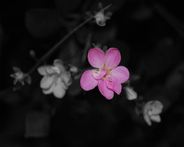 Photograph - Pink Flower  by Maggy Marsh