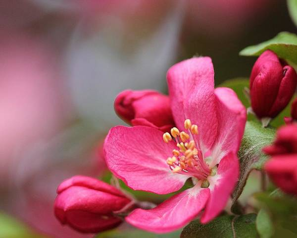 Photograph - Pink Flower by Angela Murdock