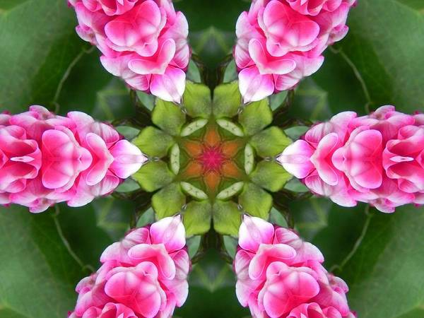 Pink Flower Star Mandala Art Print