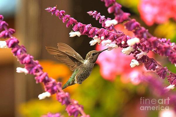 Photograph - Pink Flowers For Lunch by Adam Jewell