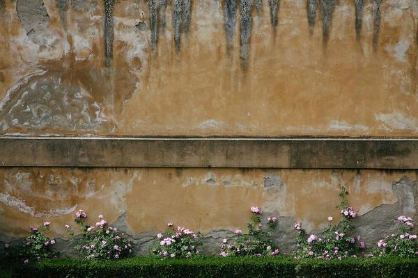 Wall Art - Photograph - Pink Flowers Growing On An Old Wall by Matt Propert