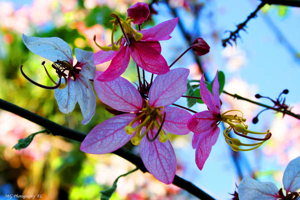 Photograph - Pink Flowers by Marty Gayler