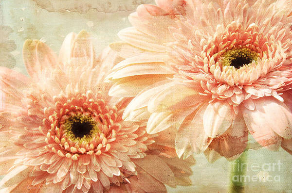 Mixed Media - Pink Gerber Daisies by Andee Design