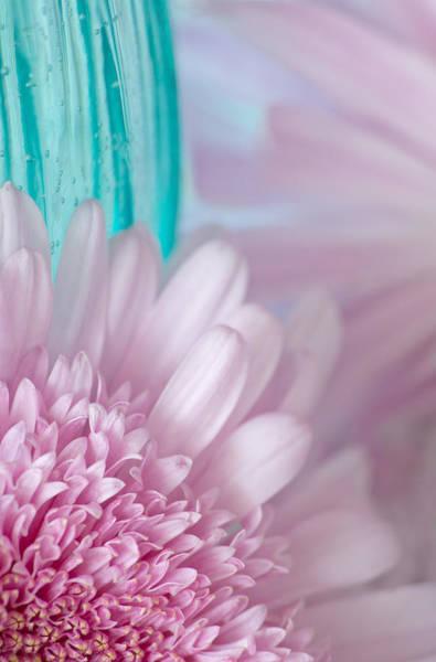 Wall Art - Photograph - Pink Gerber Daisy by Dale Kincaid