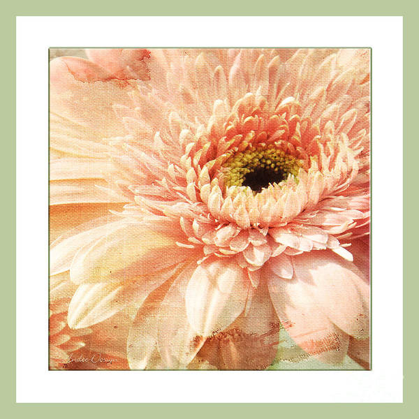 Photograph - Pink Gerber Daisy Square by Andee Design