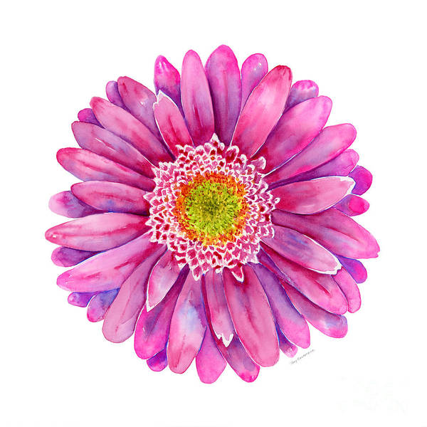 Wall Art - Painting - Pink Gerbera Daisy by Amy Kirkpatrick