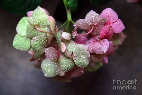 Photograph - Pink Green And Rain by Jeremy Hayden