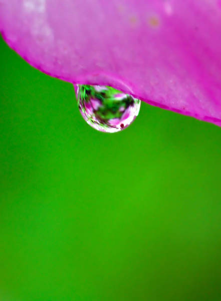 Photograph - Pink Green Raindrop by Crystal Wightman