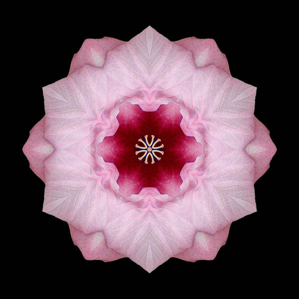 Photograph - Pink Hibiscus I Flower Mandala by David J Bookbinder
