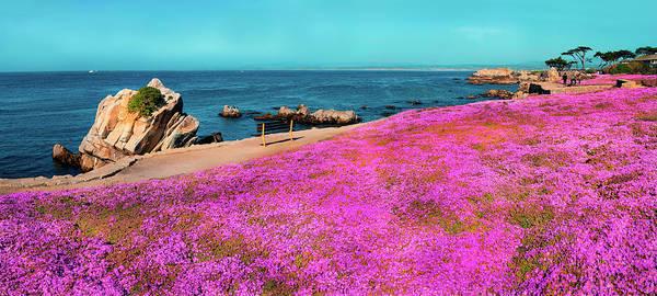 Ocean Grove Photograph - Pink Ice Plants Grow Along The Ocean by Elfi Kluck