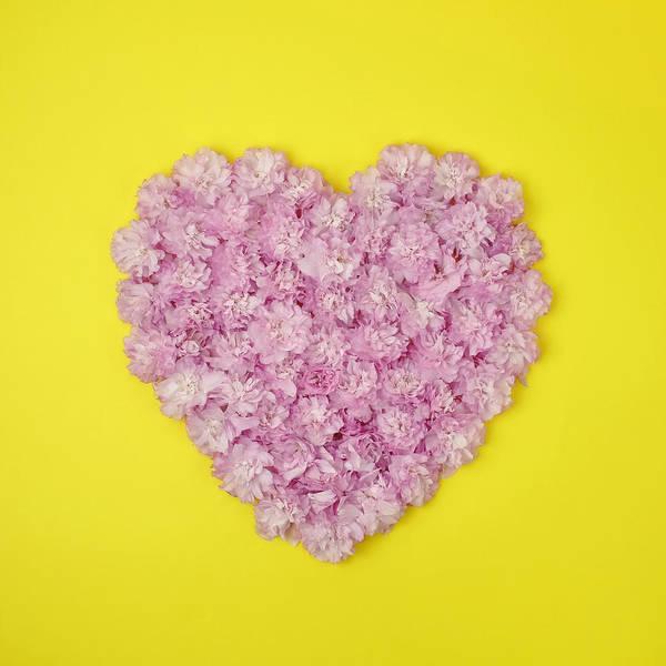 Yellow Photograph - Pink Kwanzan Cherry Blossoms In The by Juj Winn
