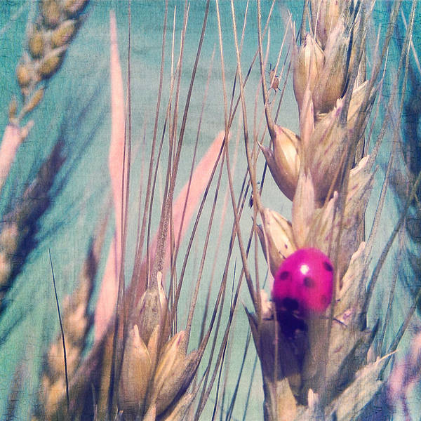 Photograph - Pink Ladybug by Marianna Mills